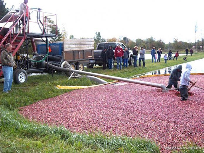 <!--:en-->Cranberry Harvest Show in South Haven, MI<!--:--><!--:ja-->ミシガン州サウスヘイブン クランベリーの収穫ショー<!--:--> 2