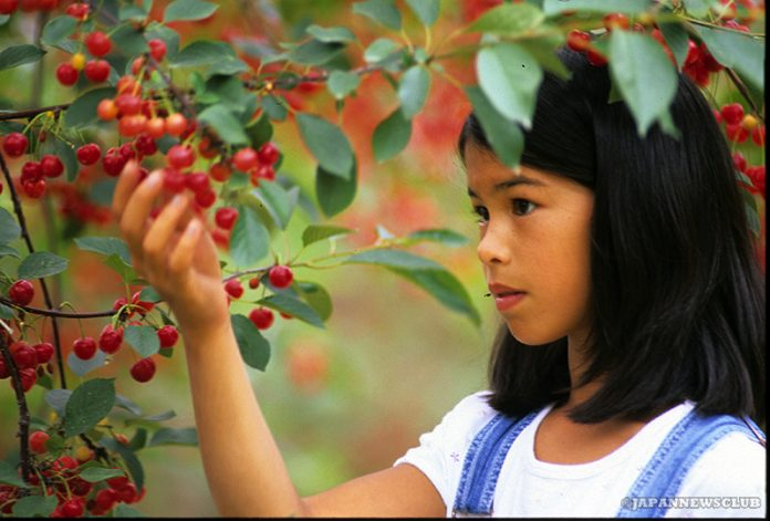 <!--:en-->A Cherry Story From The Cherry Kingdom<!--:--><!--:ja-->チェリー王国からチェリーの話<!--:--> 2
