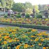 年間入園者100万人の花の名所:ブッチャート・ガーデン ~ カナダのビクトリア 3