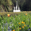 年間入園者100万人の花の名所:ブッチャート・ガーデン ~ カナダのビクトリア 7